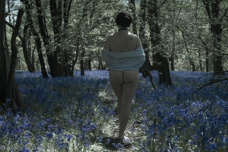A picture of Molly walking in the Bluebells