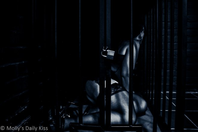 Picture of Molly in a cage