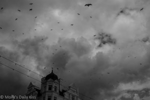 Crows circling in the sky for Beckon and despair