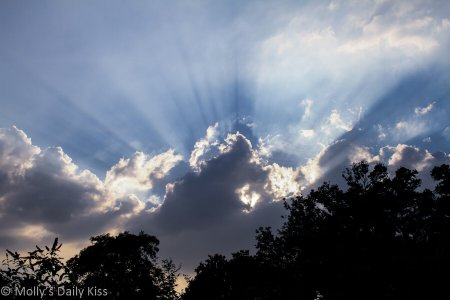 Rays of sunlight for the Great chase