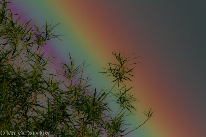 A rainbow for the post on bisexual erasure