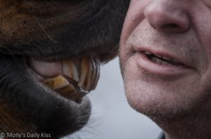 Horse kissing my face for Communication